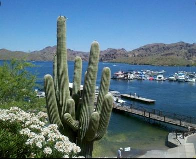 Saguaro Lake Marina